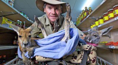 Kangaroo Dundee and otherAnimals